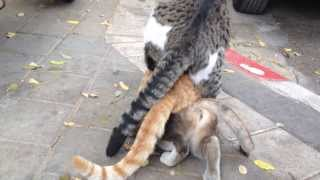 Cats orgy