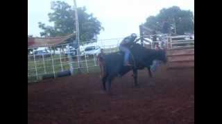 Cia de Rodeio Lobo Mau - Touro Senegal