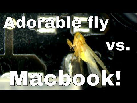 Cute bug destroys macbook