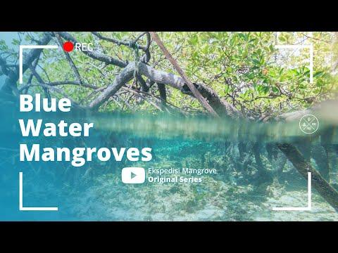 blue-water-mangroves-|-raja-ampat