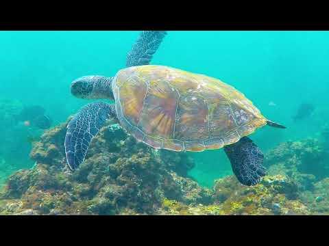 Snorkeling at Ke'e beach