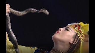 Beauty and snake   CCTV English