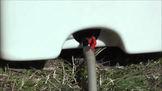 Торфяной туалет Компакт Эко с вентилятором(, 2014-09-01T14:40:45.000Z)