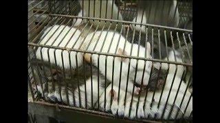 """В """"Роевом ручье"""" продают живой корм для домашних животных"""