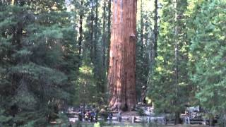 General Sherman Tree, Sequoia National Park, CA, March 2015
