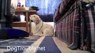Rehabilitating Ramzi Pt 7: Dog attacks vacuum cleaner out of fear afraid thumbnail