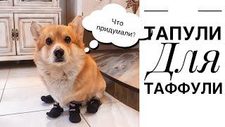 Надели первый раз ботинки на собаку / Реакция Таффи / ВЕЛЬШ КОРГИ
