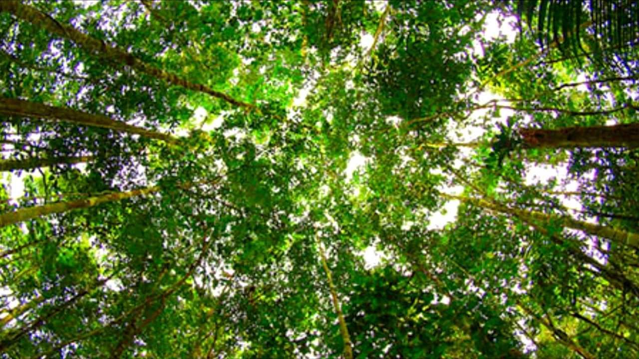 Amazon Rainforest Importance :. - YouTube