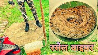 Russell's Viper Highly Venomous snake इस सांप के काटने पर होता है भयंकर दर्द और फिर मौत