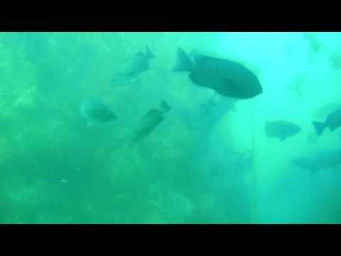 Rockfish Of The Central Coast Of California