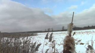 видео Отдых на Московском море