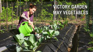 Appalachian Victory Garden: May Vegetables in Zone 7