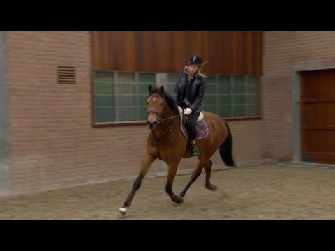 Rachel krijgt privéles van Jeroen Dubbeldam - DE WENSBOOM