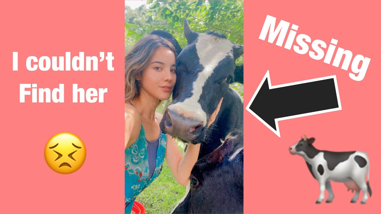 Download MY COW HAS BEEN MISSING FOR OVER 24hours!