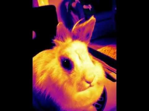 mijn konijn snuffelt