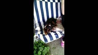 Самый жадный собака, которому мешают хвостики на яблоках.