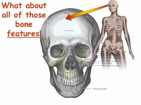 Bone Names Have Meaning  Part 1  Get Started