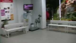 Ветеринарная клиника Бемби в Ясенево. Краткое знакомство с клиникой.(Ветеринарная клиника Бемби рядом с метро Ясенево расположена по адресу улица Тарусская дом 22 кор 2. Клиника..., 2015-04-02T18:46:43.000Z)