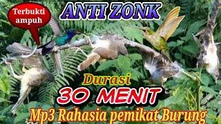 Mp3 Suara Pikat Semua jenis Burung Kecil/kolibri Ampuh Tanpa Iklan