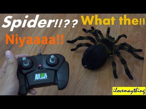 Animal Planet's R/C Spider Unboxing & Playtime w/ Hulyan & Maya 2 of 2