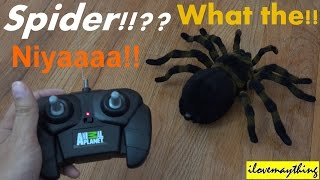 Animal Planet's R/C Spider Unboxing & Playtime w/ Hulyan & Maya 2 of 2