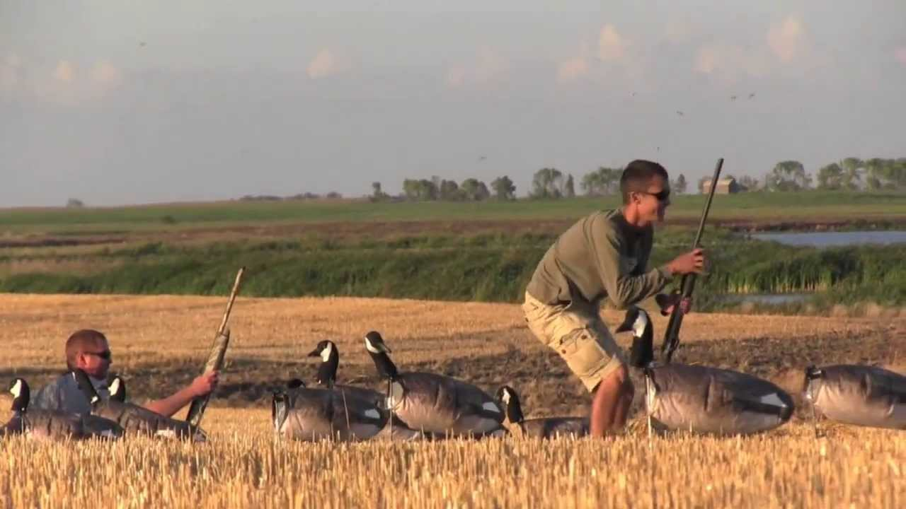 Backroad Honkers with White Rock Decoys