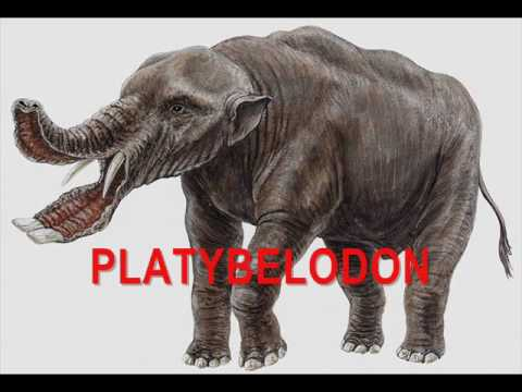 Image of: Ancient Beasts Youtube Bizarre Prehistoric Animals Ever Existed Youtube