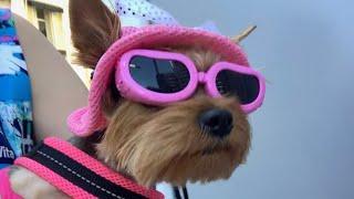 Собираем собаку на море//Что взять в отпуск с собакой