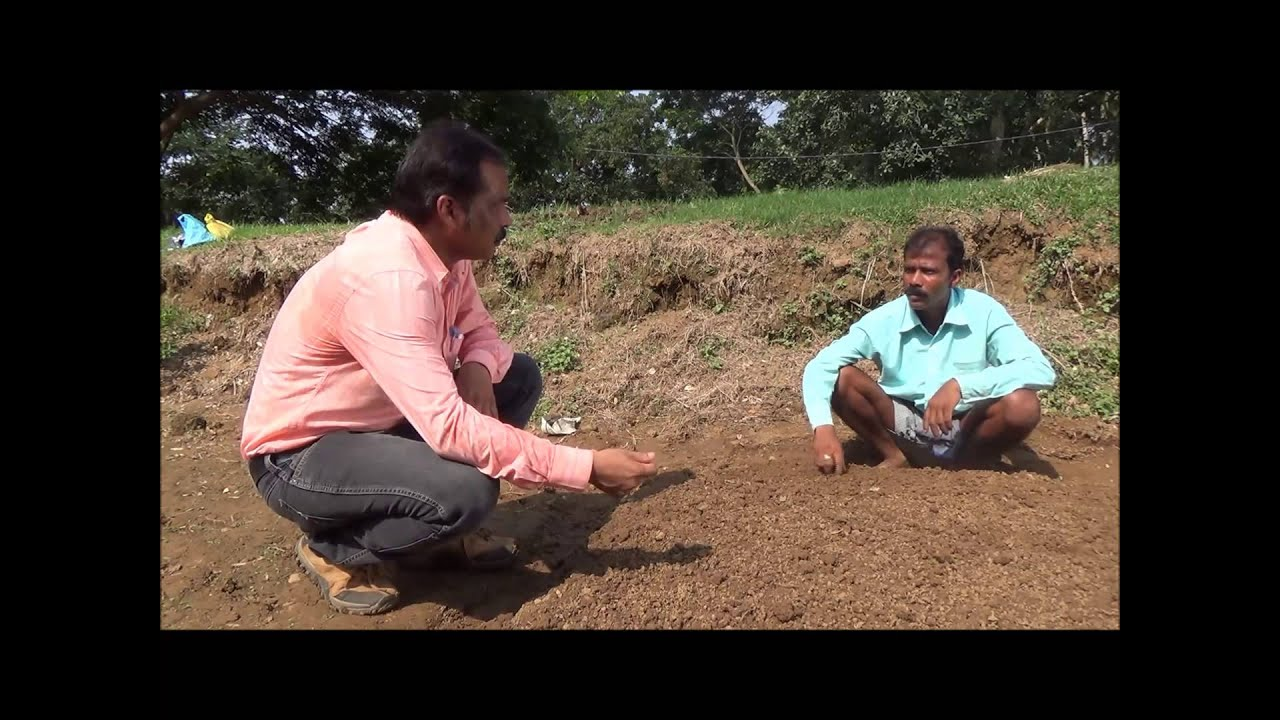 Cereal Systems Initiative for South Asia (CSISA) » CSISA Success Story