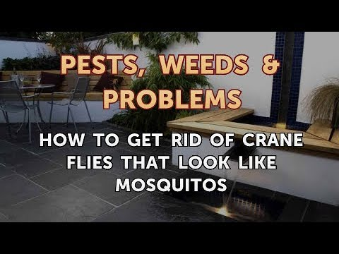 How to Get Rid of Crane Flies That Look Like Mosquitos