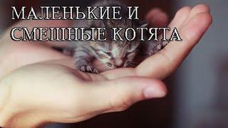 Маленькие котята смешные и интересные