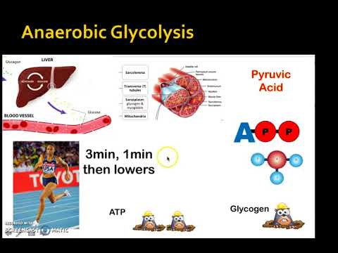 Energy System Anaerobic Lactic Acid System