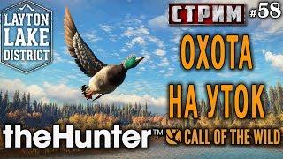 theHunter Call of the Wild #58 СТРИМ 🔫 - Охота на Уток - Ружьё - Утка Кряква