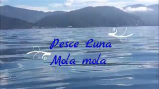 Pesce Luna, Mar Ligure, Deiva Marina