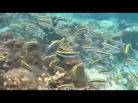 Underwater Bonaire and Grand Turk - 2016