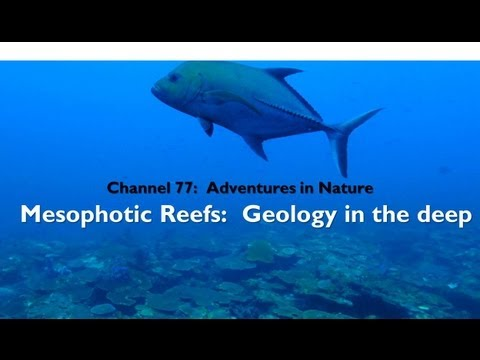 Adventures in Nature: Mesophotic Reefs