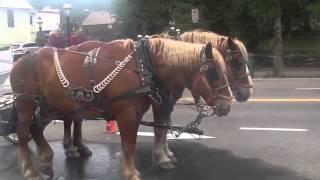 Random Horse