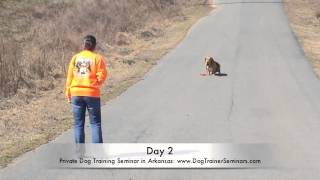 Basset Hound Heeling Before/after Video! Private Dog Training Seminar In Arkansas.