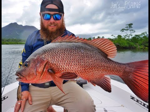 HOW TO CATCH MANGROVE JACKS - ON SURFACE LURES -Jim's FISHING