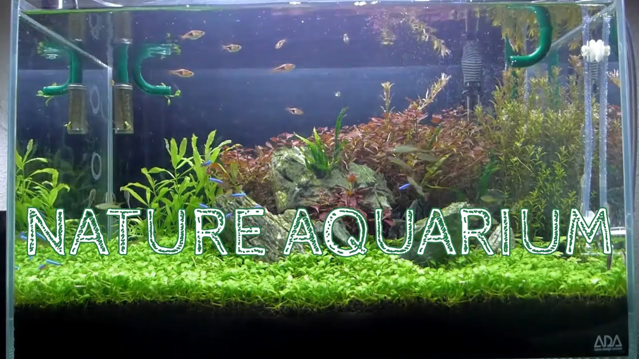 Nature Aquarium Aquascape Iwagumi 2b Youtube