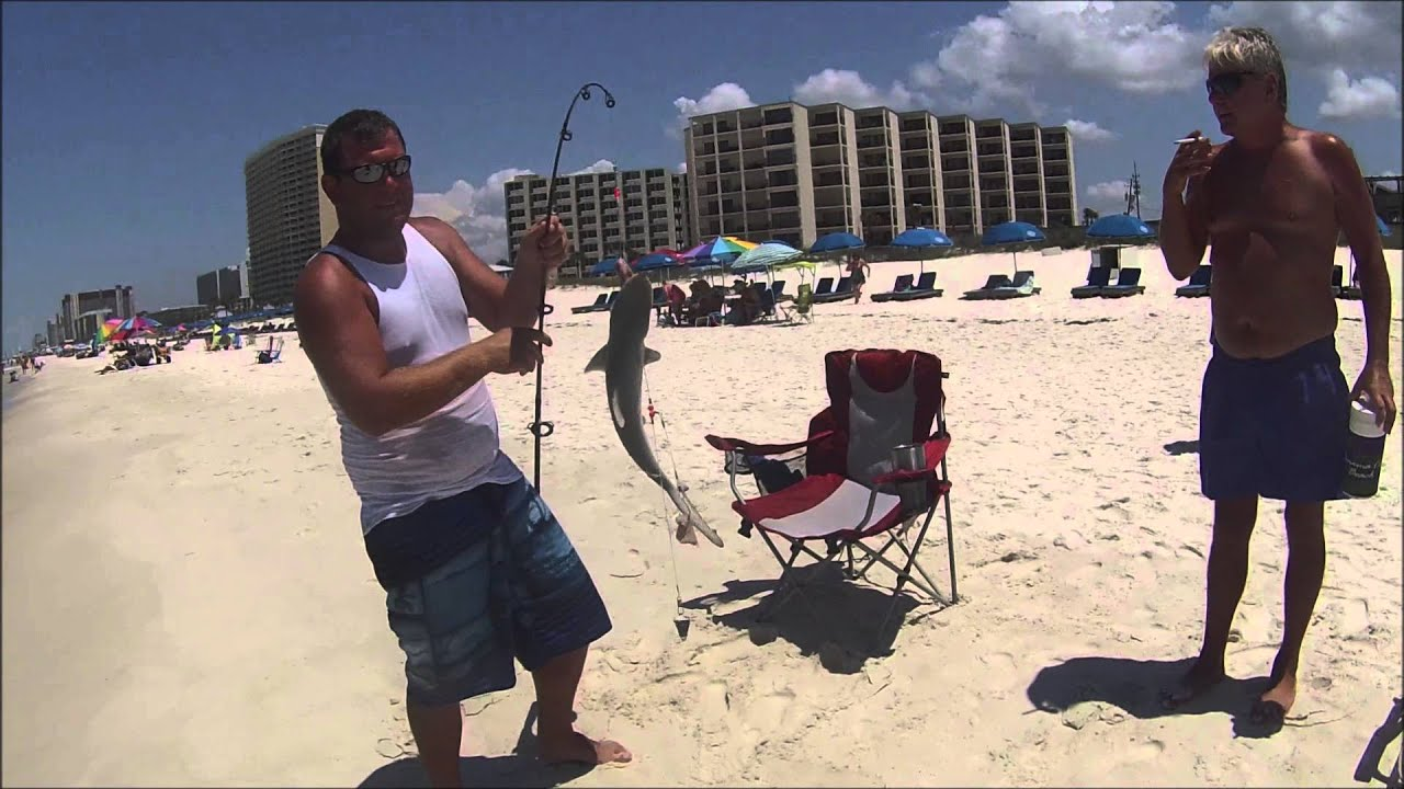 Catching baby sharks at panama city beach fl youtube for Shark fishing panama city beach