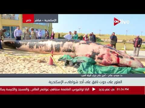 تفاصيل العثور على حوت نافق على أحد شواطئ الإسكندرية - د. مجدي علام