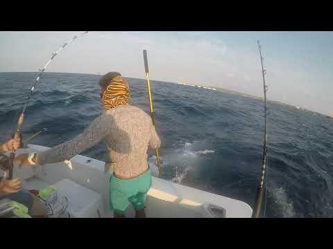 Aruba Driftwood Charter Tim Catches First Fish!