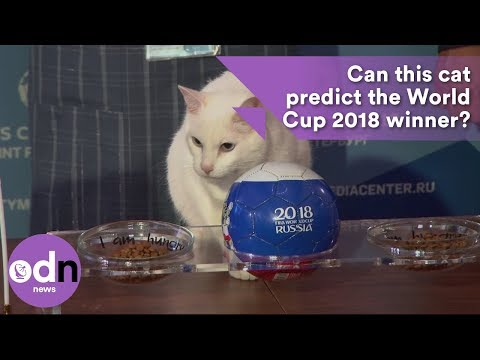 Picture of a world cup winner 2020 predicts cat