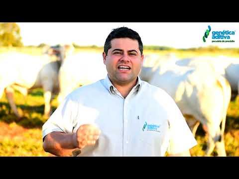 Flavio Sandim falando de uma oferta muito especial - LOTE 1000 - REM GALO - VENDA DE 50%