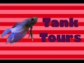 BETTA FISH TANK TOURS FEBRUARY 2017! 🎉 Paris Jean