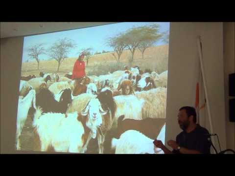 Livestock Production by the Bedouin in the Negev Desert, Israel
