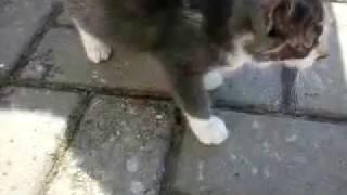 котята и чужая кошка-мама обедают