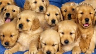 Топ 10 самых маленьких пород собак