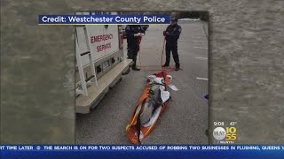 Dead Dolphin Found Floating In Hutchinson River